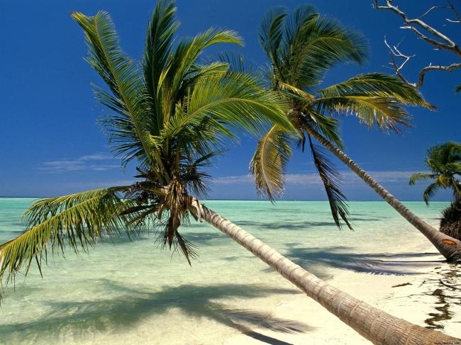 VIAJE A PUNTA CANA Y PANAMA DESDE ARGENTINA - Buteler en el Caribe