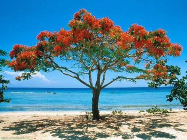 VIAJES A PLAYAS DEL ESTE + VARADERO - 10 NOCHES - Varadero /  - Buteler en el Caribe