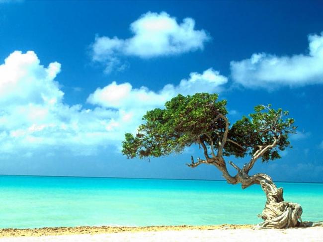 VIAJES A LA ISLA DE ARUBA DESDE ARGENTINA - Buteler en el Caribe