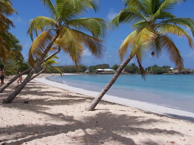 VIAJES A MARTINICA DESDE ARGENTINA - Buteler en el Caribe